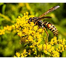Yellow Wasp On Yellow Flower 1 Photographic Print