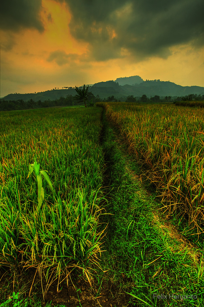 Motherland by Felix Haryanto