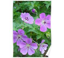 Purple Petals Poster