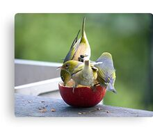 How many birds can you get on an apple.........? Canvas Print