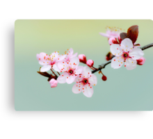Early Spring Blossoms Canvas Print