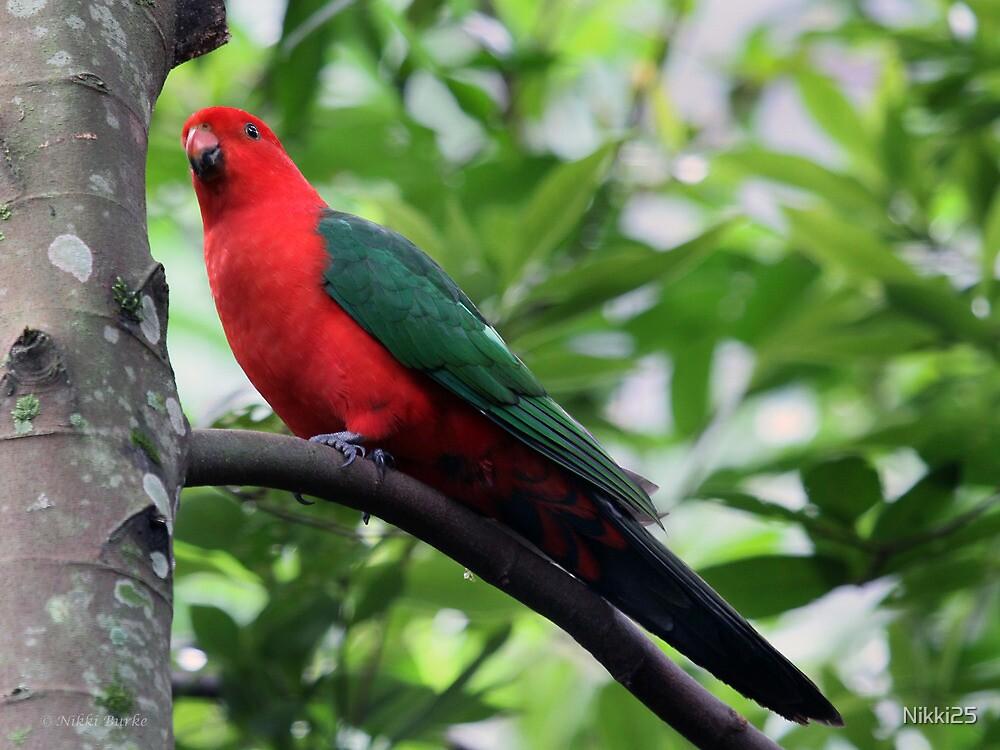 King Parrot 2 by Nikki25