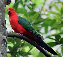 King Parrot 2 by Nikki25