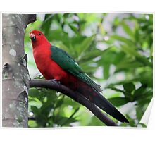 King Parrot 2 Poster