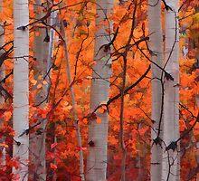 The Splendor of Autumn by Don Schwartz