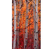 The Splendor of Autumn Photographic Print
