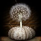the dandelion tree by © Karin  Taylor
