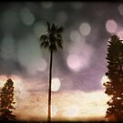 palm tree by geophotographic