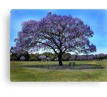 100 Year Old Jacaranda Tree Canvas Print