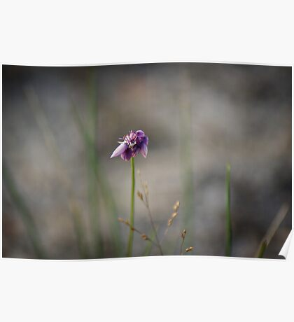 vanilla lily Poster