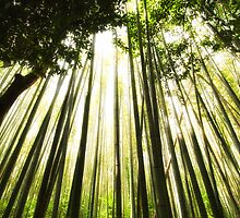 Bamboo forest by fontina