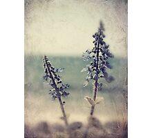 beside the sea Photographic Print