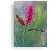 Every Flower Was Once a Seed Canvas Print