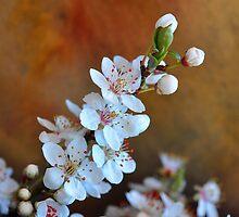 Anuncio de Primavera................ by cieloverde