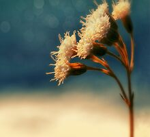 sundrenched by © Karin  Taylor