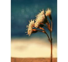 sundrenched Photographic Print