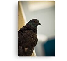 Bird's Eye 2 (the thinker) Canvas Print