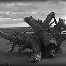Driftwood by Lou Wilson