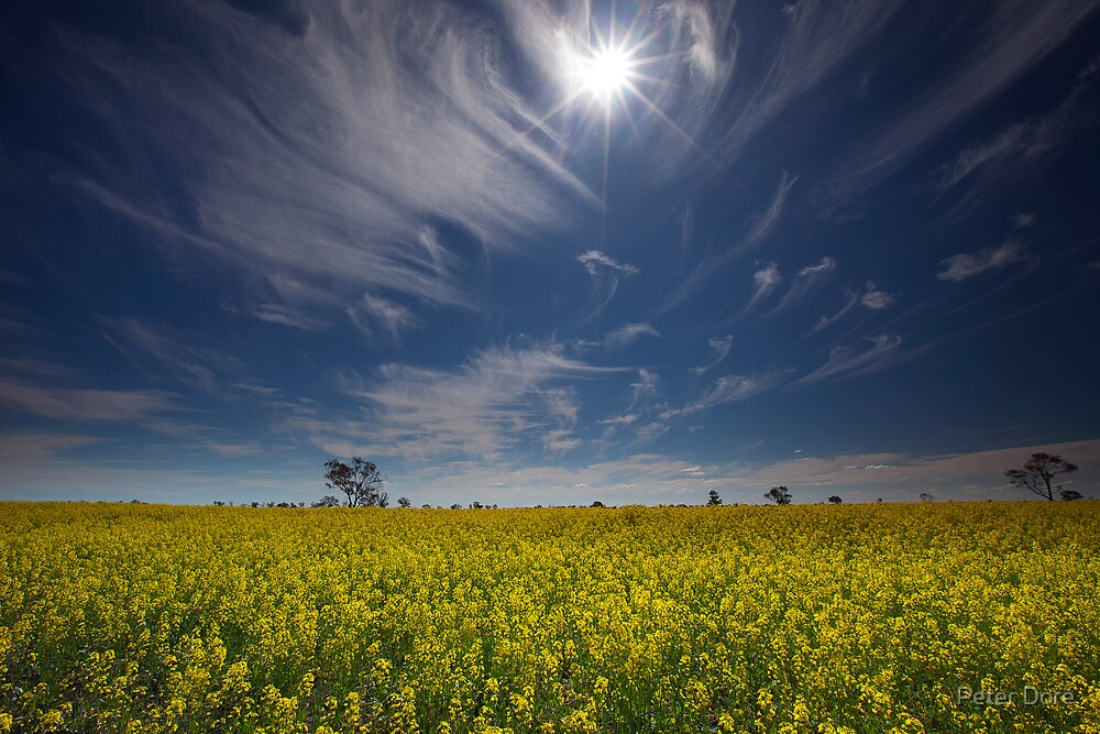 Under the Outback Sun by Peter Doré