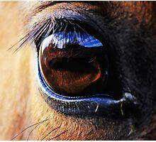 Horse Eye View Photographic Print