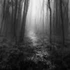 Misty Woods by Jessy Willemse
