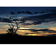 Tree at sunset 1 Photographic Print