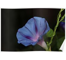 Morning Glory Macro Poster