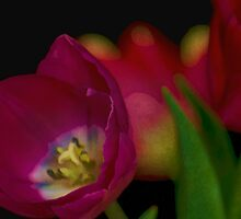 Tulips Together by Don Schwartz