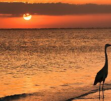 An Evening Stroll on the Beach by Don Schwartz