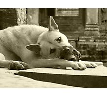 Temple Dog in Cambodia Photographic Print