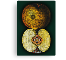 newton's infinite fruit of cosmic indolence Canvas Print