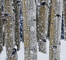Gently Falling Snow Among the Aspens by Don Schwartz