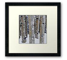 Gently Falling Snow Among the Aspens Framed Print
