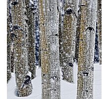 Gently Falling Snow Among the Aspens Photographic Print