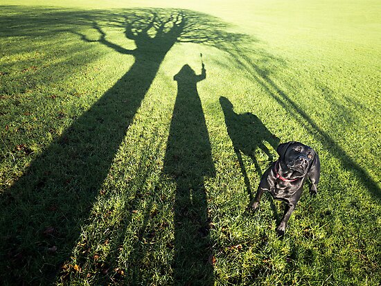 My dog filby in the Park by Heather Buckley