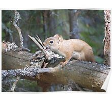 Squirrel sounds the alarm Poster