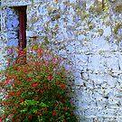 Stone Barn With Fuschia by Fara