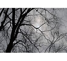 Silhouette of Trees Photographic Print