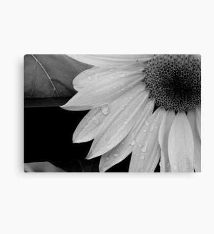 Tears That Last For Years Canvas Print
