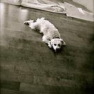 Puppy dog by Ariel Faraci