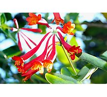 Swooping tubular flowers Photographic Print