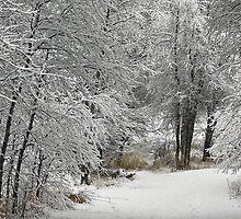 Winter's Kiss by Don Schwartz