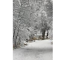 Winter's Kiss Photographic Print