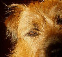 Sweet Face Dog by Jane Underwood