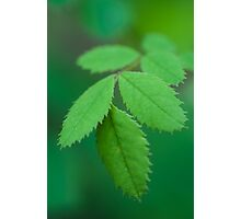 Finger Leaves Photographic Print
