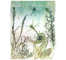 Dragon Fly Migration Poster