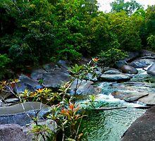 Rainforest Creek by tiffany87