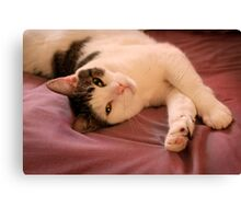 Relaxed Max Canvas Print