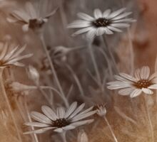 Nikon Daisies © Vicki Ferrari Photography Sticker