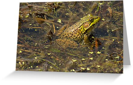 Frogger by tm-photography3